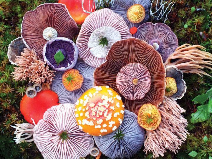 Arrangiamenti di Funghi fotografati da Jill Bliss